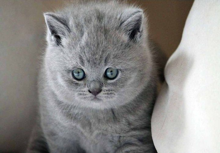 Nama Kucing Yang Bagus Untuk Laki Laki 81021 Nama Untuk Kucing Comel Lucu Dan Unik